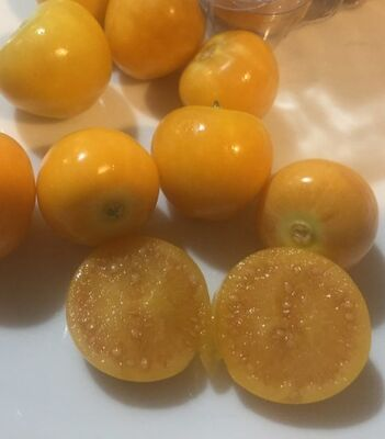- ALTIN ÇİLEK (Goldenberry) FİDANI